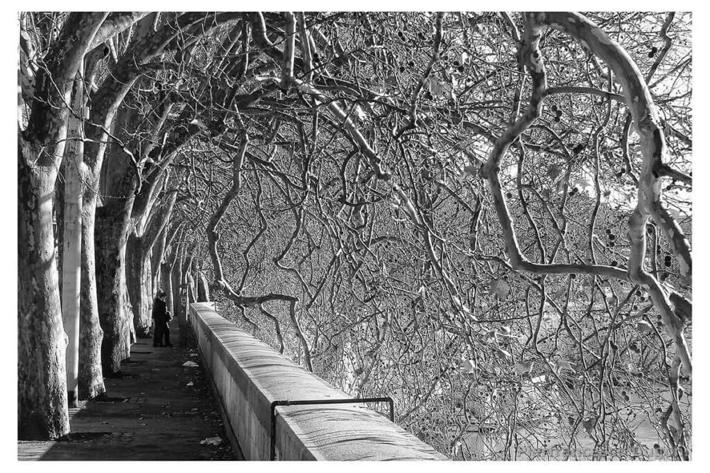 Rami-e-foglie